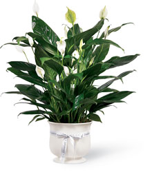 The FTD Comfort Planter from Parkway Florist in Pittsburg PA