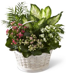 The FTD Rural Beauty Dishgarden from Parkway Florist in Pittsburg PA