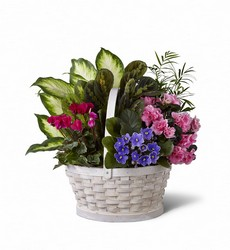 The FTD Peaceful Garden Planter from Parkway Florist in Pittsburg PA
