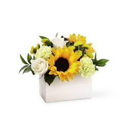 The FTD Sweet as Lemonade Bouquet from Parkway Florist in Pittsburgh PA