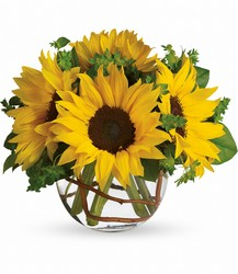 Sunny Sunflowers from Parkway Florist in Pittsburgh PA