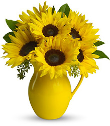 Sunny Day Pitcher of Sunflowers from Parkway Florist in Pittsburgh PA