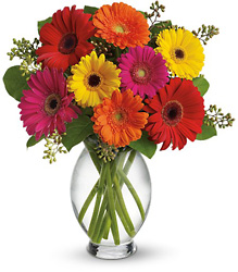 Gerbera Brights from Parkway Florist in Pittsburgh PA