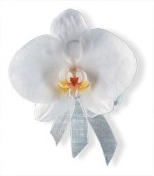 White Phalaenopsis Corsage from Parkway Florist in Pittsburgh PA