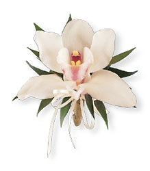Cymbidium Orchid Corsage from Parkway Florist in Pittsburgh PA